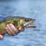 Fishing Opener Restrictions in Minnesota