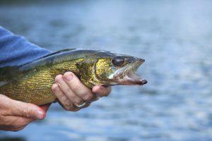 Fishing Opener Restrictions in Minnesota